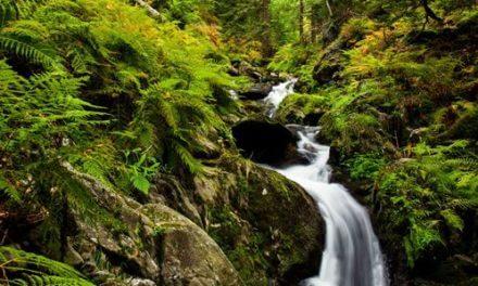 Program LIFE nabízí 85 milionů korun na ochranu životního prostředí a klimatu