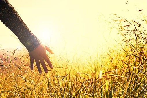 """Nová Evropská strategie """"od zemědělce ke spotřebiteli – od vidlí po vidličku"""""""