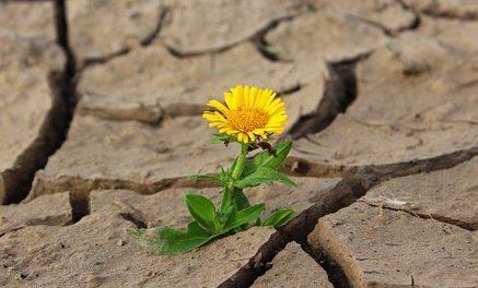 V České republice ubylo od roku 2000 téměř 113 tis. ha obhospodařované zemědělské půdy