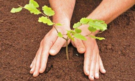 Veletržní souběh FOR PASIV 2020 pomůže přírodě: Za každého návštěvníka bude vysazen jeden strom