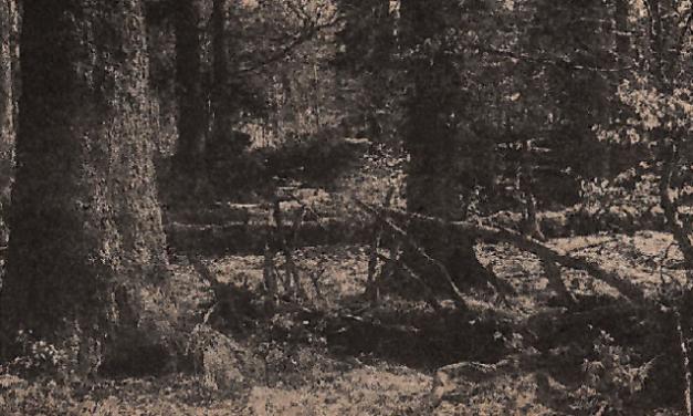Pralesové rezervace v ČSSR