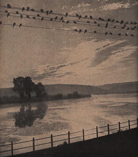 Naše řeky zpívají v elektrických drátech
