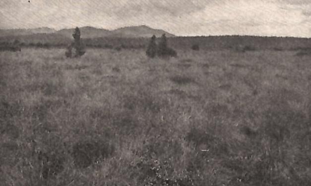 Rašelinářství