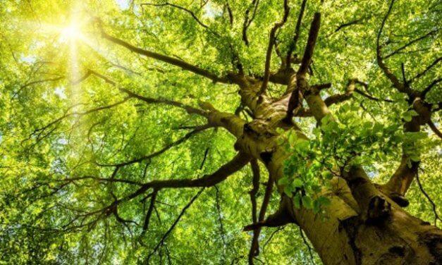 Lesní hospodáři potřebují seriózní scénáře a prognózy klimatických změn