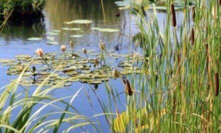Evropská agentura pro životní prostředí vyhlašuje fotosoutěž na téma znovuobjevení pouta s přírodou kolem nás