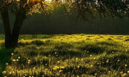 Zelený zdroj života