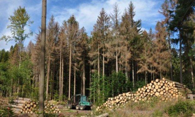 Masivní těžba českých lesů začala ovlivňovat klima. Způsobuje více emisí než auta
