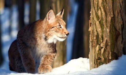 Projekt ekologicky šetrné dopravní sítě v Karpatech získal celoevropskou cenu za ochranu přírody