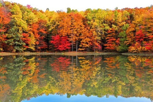 Co může za barevnou krásu podzimního listí
