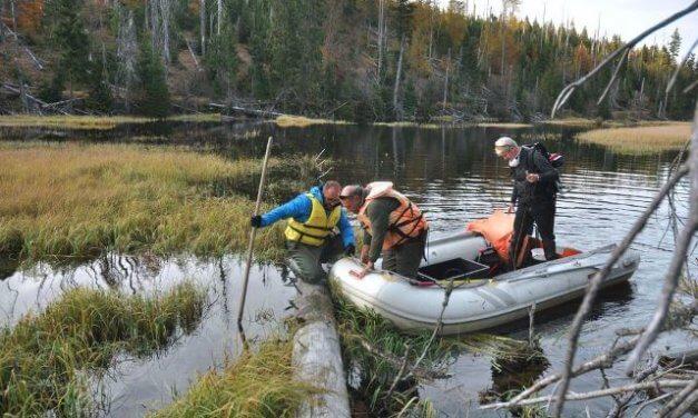 Do šumavského jezera Laka se po 50 letech vrátili pstruzi