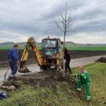 Na sázení stromů MŽP přidává dalších 350 milionů korun