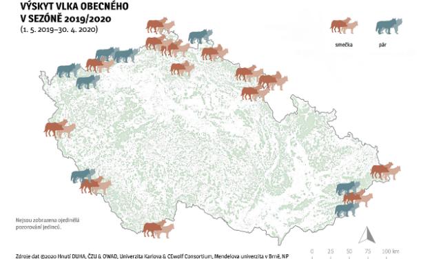 Vlčích teritorií meziročně přibylo, do Česka jich zasahuje dvaadvacet