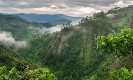 Kácení ohrožuje africké vysokohorské lesy coby důležitou zásobárnu uhlíku
