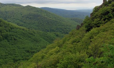 Jizerskohorské bučiny jsou naší první přírodní lokalitou světového dědictví UNESCO