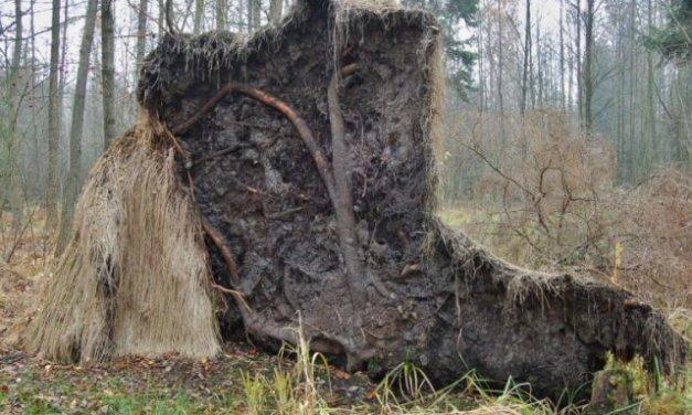 Vlastnosti lesních půd předurčují růst a zdravotní stav budoucích lesů