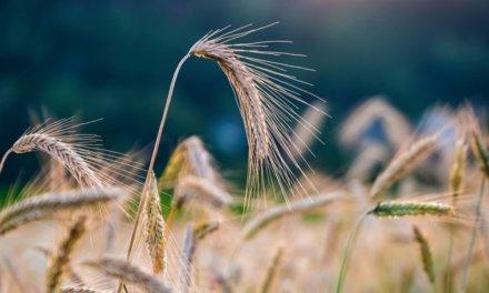 Zásadní úspěch v oblasti udržitelnosti: společnost Belvedere dokončila zařízení na zpracování biomasy